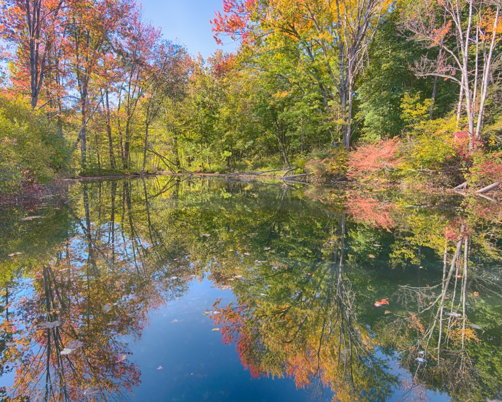 landscape image of beautiful trees reflected on lake